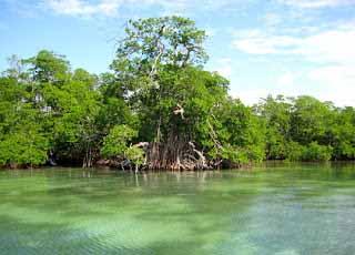 Los manglares son considerados como la primera línea protectora de la tierra ante fenómenos meteorológicos.