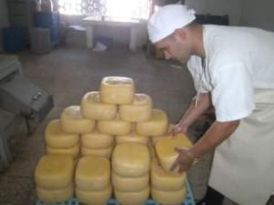Distintas variedades de queso distinguen a la entidad por casi siete décadas. Foto Xiomara Alsina.