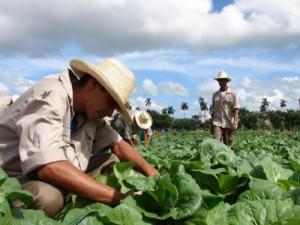 La ANAP agrupa en el país cerca de 400 mil campesinos y cooperativistas.
