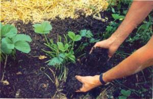 El Taller resulta un espacio que pretende la capacitación tecnológica para lograr una agricultura sustentable.
