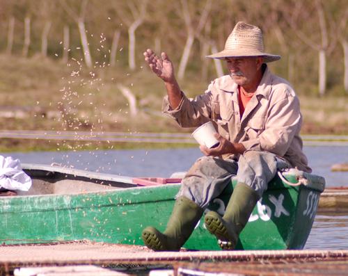 sancti spiritus, presa el nispero, tilapias, acuicultura, jatibonico, pesca
