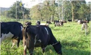 El taller busca contribuir al mejoramiento de la alimentación animal.