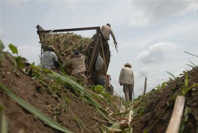 Desde mayo hasta septiembre se intensificarán las faenas de siembra.