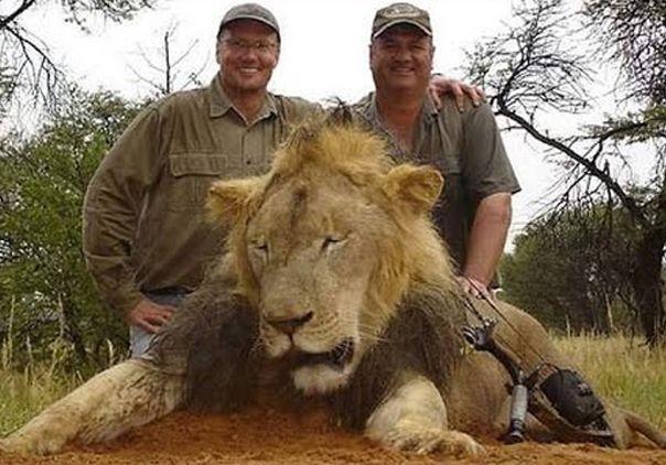 leon, fauna, animales, zimbabue