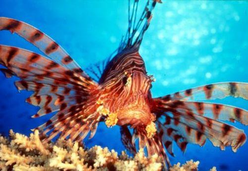 sancti spiritus, pez leon, playas, citma, medio ambiente, zonas marinas, trinidad, sur espirituano