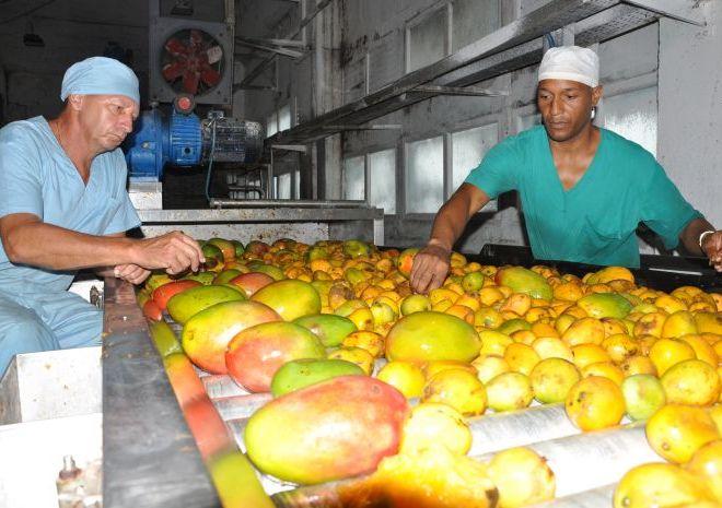 sancti spiritus, frutas, sustitucion de importaciones, industria alimenticia, minal, fabrica de conservas
