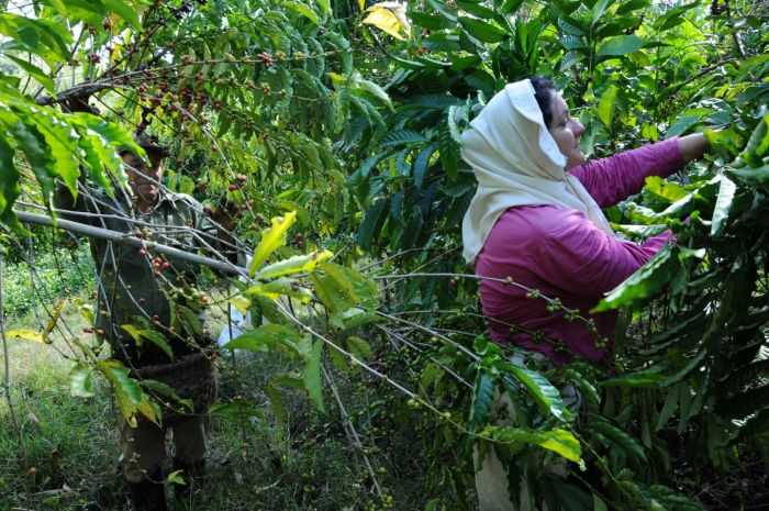 Muchas de estas unidades necesitan reanimar su trabajo, la economía y acabar de convertirse en una modalidad agraria viable y eficiente.