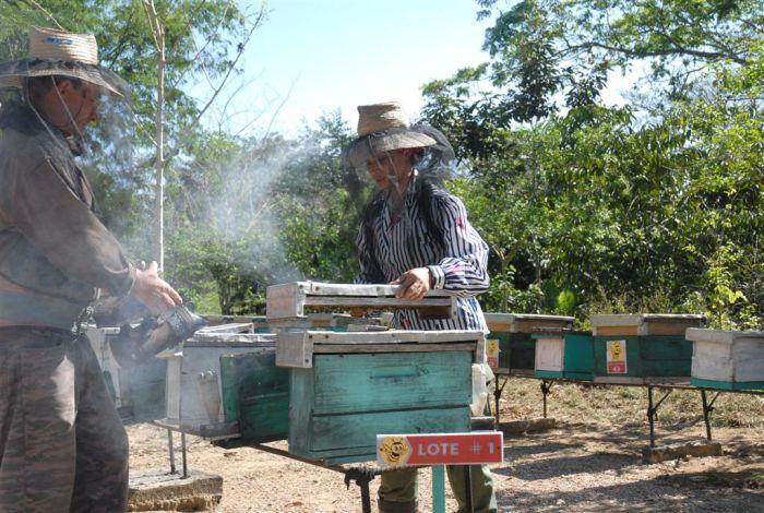 sancti spiritus, apicultura, miel, produccion de miel, propoleos, cera