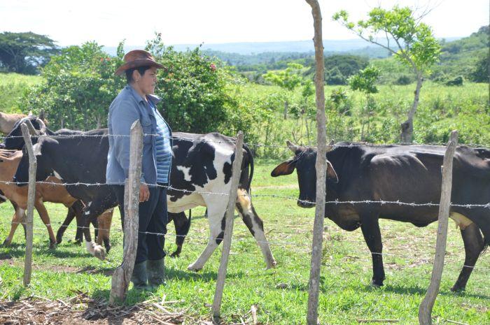 sancti spiritus, mujeres, cooperativas, tierra en usufructo, ganaderia, leche, acopio de leche