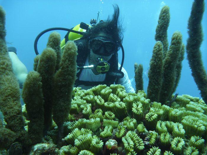 sancti spiritus, trinidad citma, arrecifes, medio ambiente