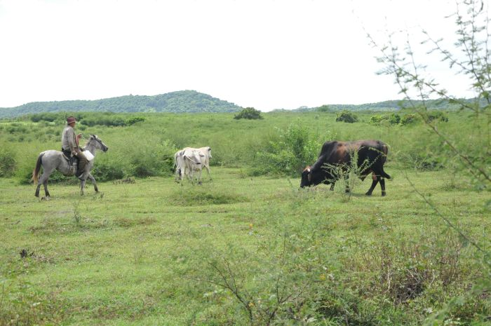 sancti spiritus, fnta, empresa agropecuaria fnta, agricultura