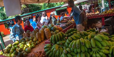 El pasado semestre menguó cinco por ciento el costo promedio para el consumidor de la canasta de productos agrícolas y cárnicos. (Foto: Roberto Suárez)