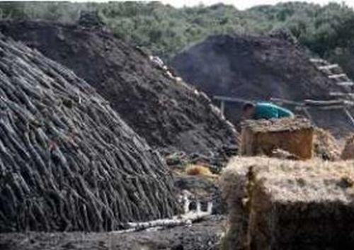 Sancti Spíritus Con Récord En Producción De Carbón Vegetal