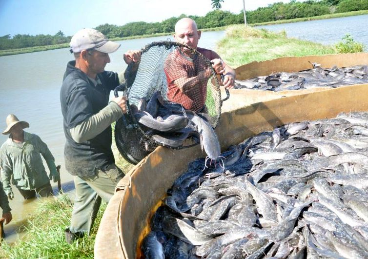 sancti spiritus, pesca, pescaspir, presa zaza