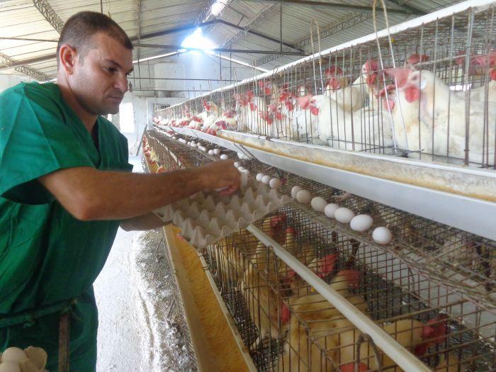 sancti spiritus, huevos, avicultura