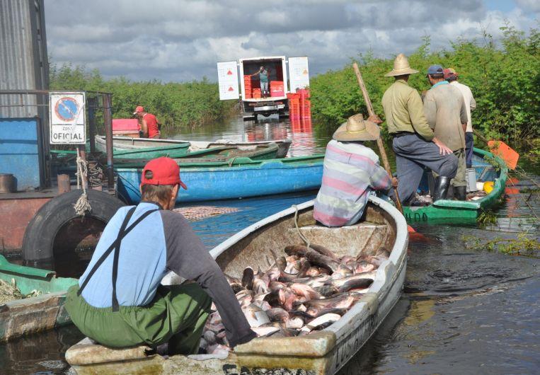 sancti spiritus, pesca, pescaspir, acuiculturar, presa zaza