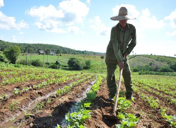 Desde el 2009 se ha trabajado en pos de revertir los factores degradantes que limitan el rendimiento agrícola.