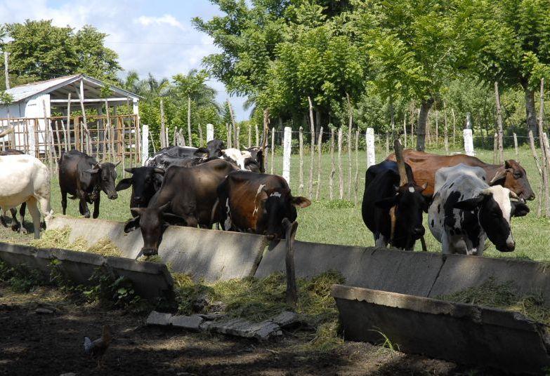 Sancti Spíritus es la tercera provincia más ganadera de Cuba.