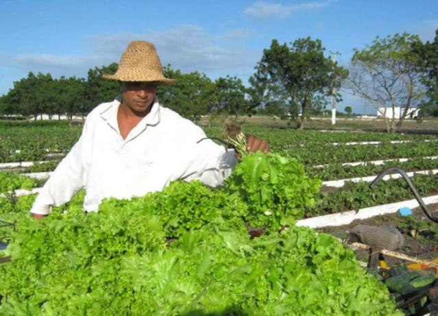 Explotar cada posibilidad de siembra resulta esencial para sostener la oferta de vegetales y hortalizas.
