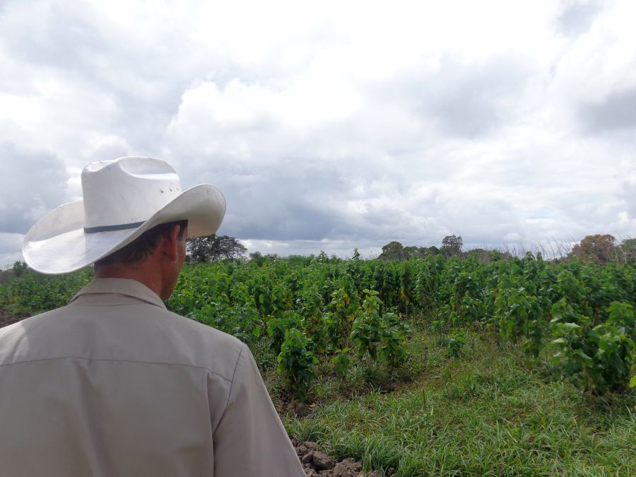 sancti spiritus, yaguajay, venegas, produccion de alimentos, ganaderia
