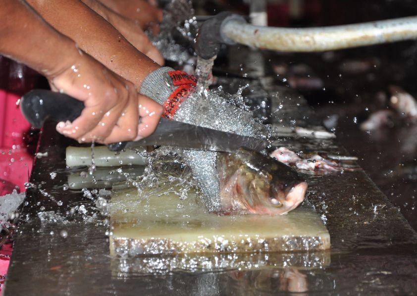 sancti spiritus, industria pesquera, indupir, acuicultura