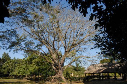 El evento será auspiciado por el Jardín Botánico espirituano y persigue incentivar el estudio y la protección de la naturaleza.