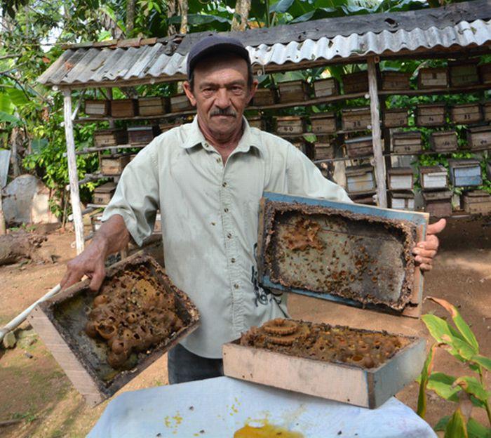 sancti spiritus, apicultura, miel, yaguajay