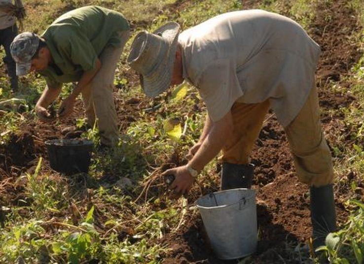 cuba, anap, campesinos cubanos, relaciones cuba-estados unidos