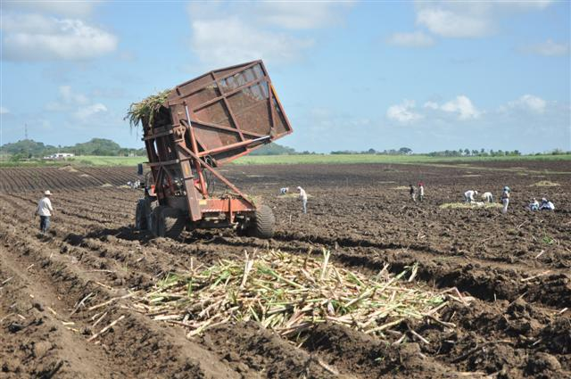 Las carretas autobasculantes, moderna tecnología llegada a la provincia desde el pasado año. (Foto: Vicente Brito/ Escambray)