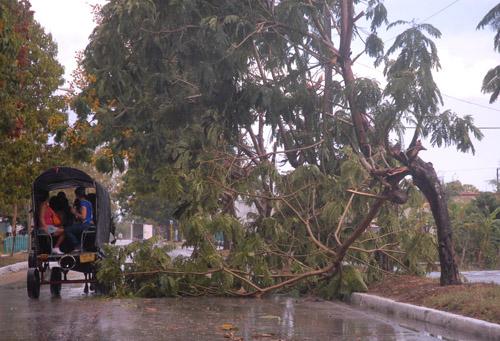 El fenómeno provocó diversos árboles y ramas partidos y proyectados sobre la vía pública. (Foto Archivo)