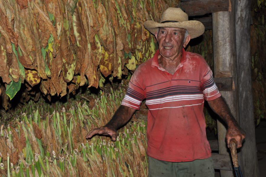 sancti spiritus, agricultura sancti spiritus, tabaco, ganaderia, fomento