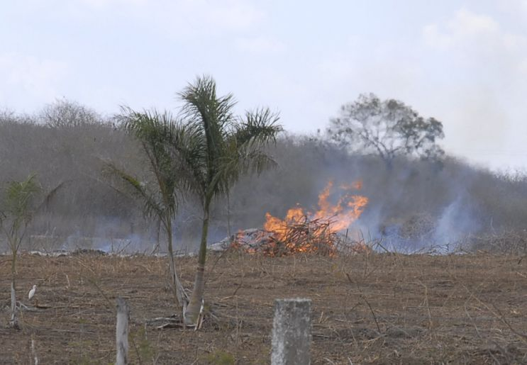 sancti spiritus, incendios forestales, guardabosques