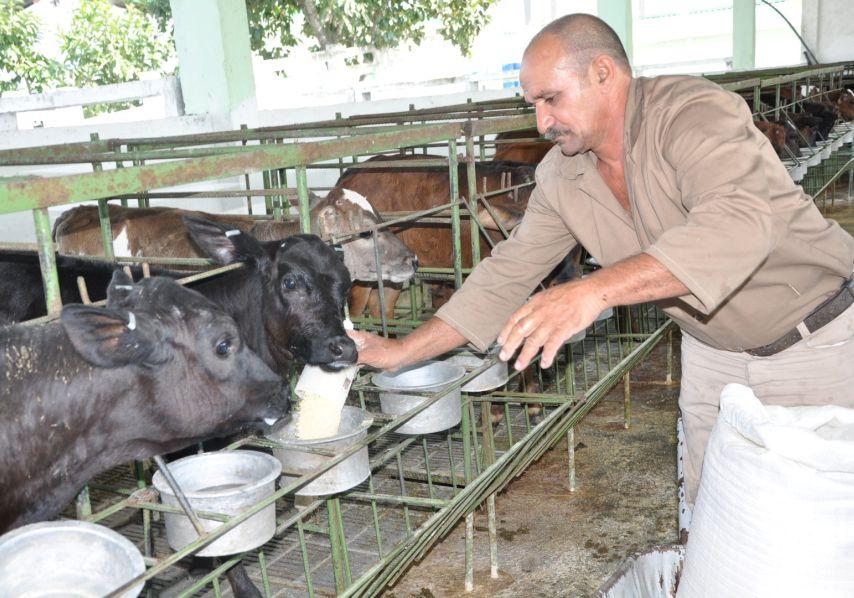 sancti spiritus, ganaderia, produccion leche