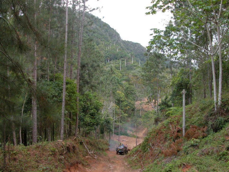 sancti spiritus, flora y fauna, reforestacion