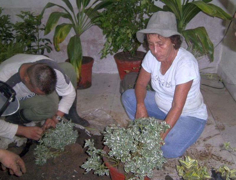 sancti spiritus en 26, servicios comunales, plantas ornamentales, fomento
