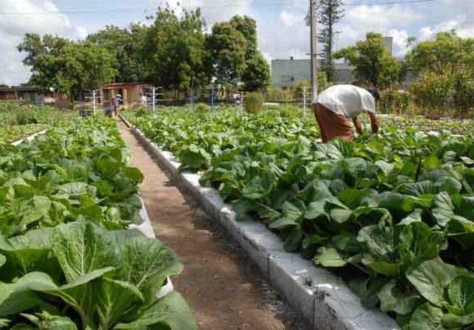 cuba, sancti spiritus, agricultura urbana
