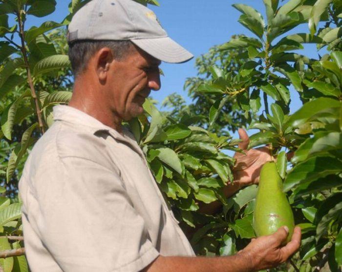 agricultura-urbana-2-557x520