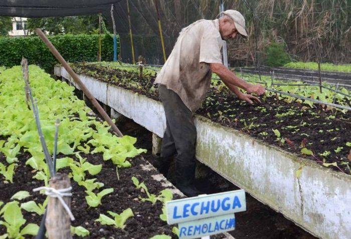 agricultura-urbana-4-556x520