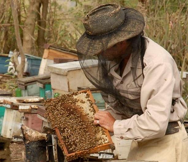 La producción de miel en la provincia exhibe este año un incremento.