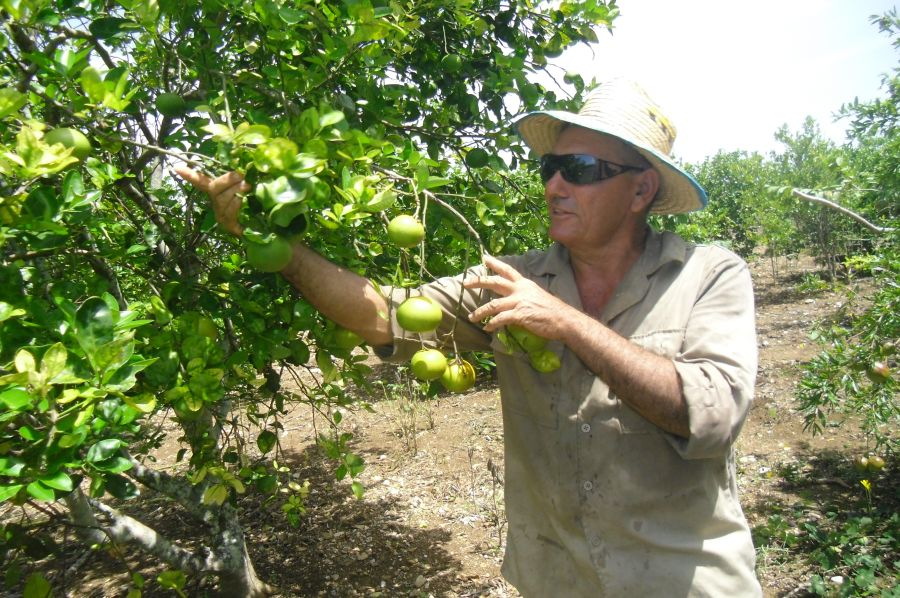 sancti spiritus, entrega de tierras en usufructo, produccion agricola, yaguajay