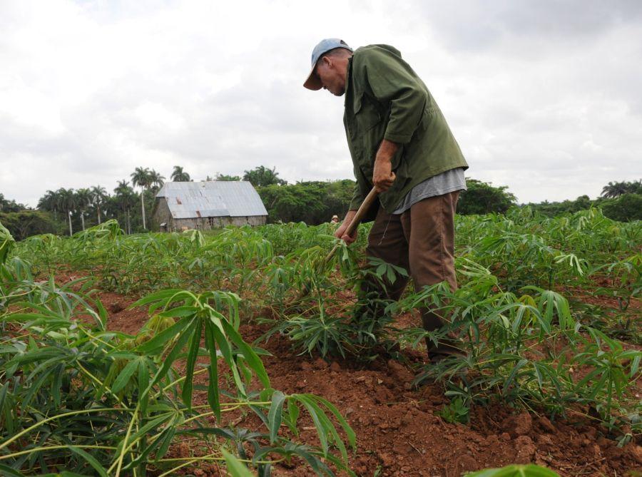 cuba, sector agropecuario, ministerio de finanzas y precios, ministerio del trabajo y seguridad social