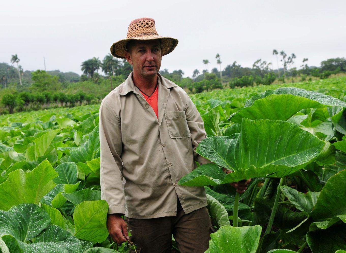 sancti spiritus, agricultuta, yaguajay