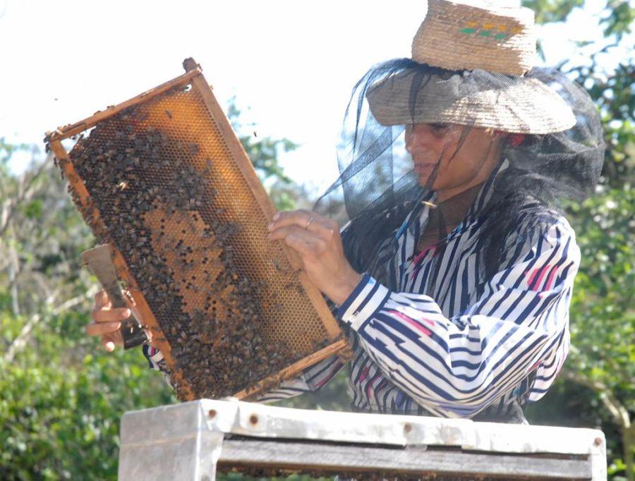 sancti spiritus, apicultura