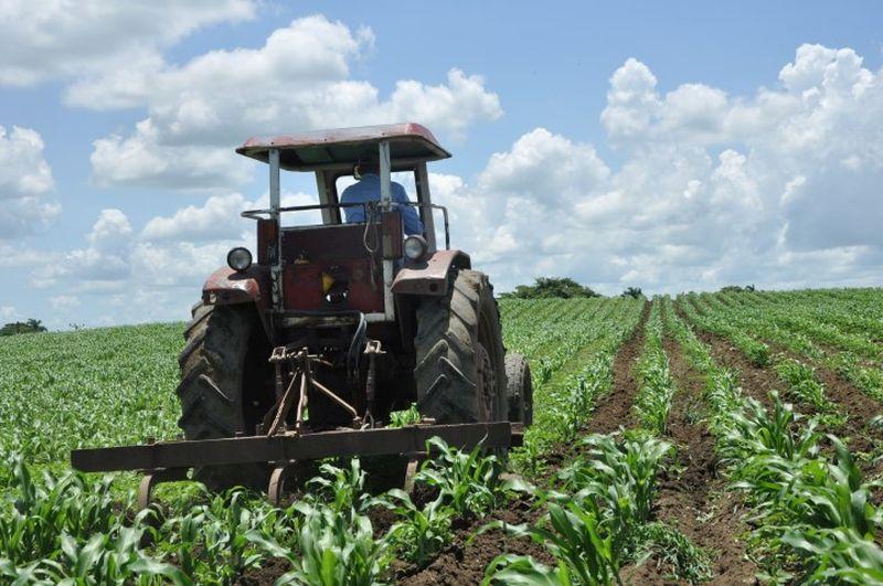 El cultivo de maíz tiene arraigo entre las fuerzas campesinas de la provincia.
