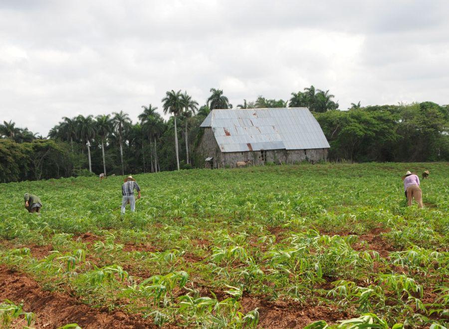 sancti spiritus, medio ambiente, capa de ozono, sanidad vegetal, agricultura, ozono troposferico