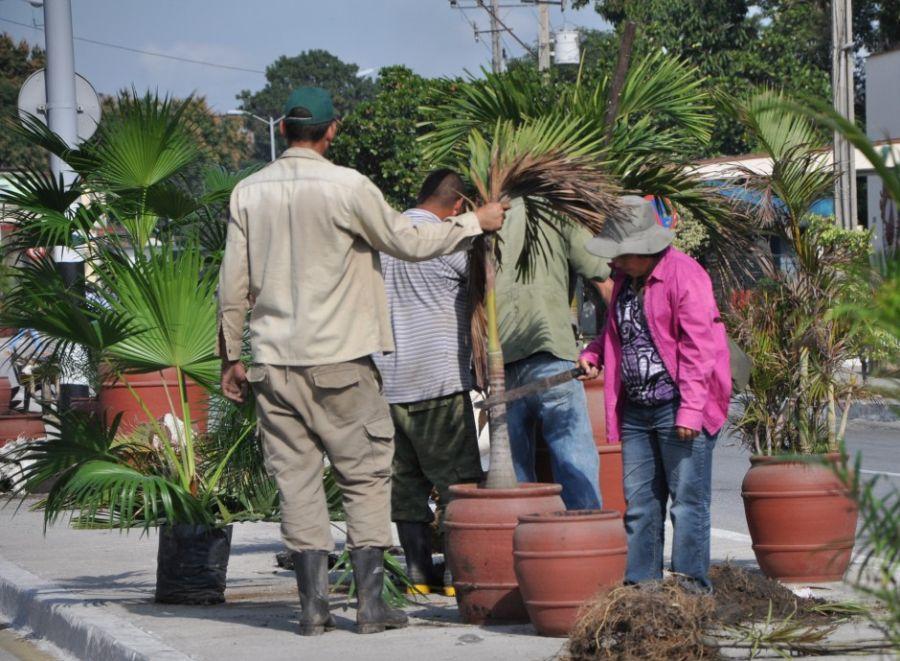 sancti spiritus, servicios comunales, planta ornamentales