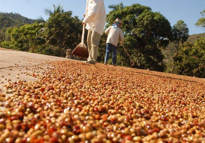 café, exportación, Sancti Spíritus