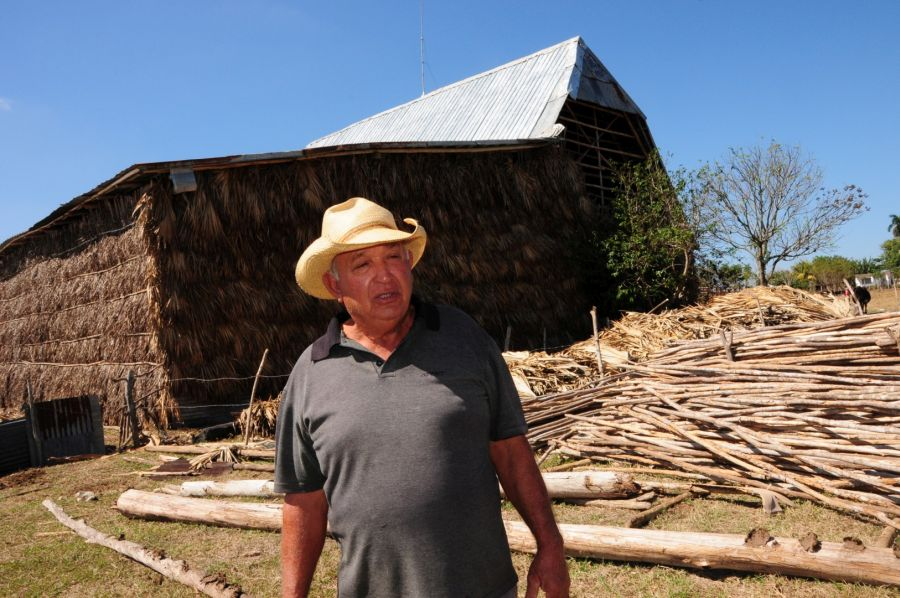 sancti spiritus, agricultura, produccion de alimentos, cabaiguan tabaco, cultivos varios, ganaderia