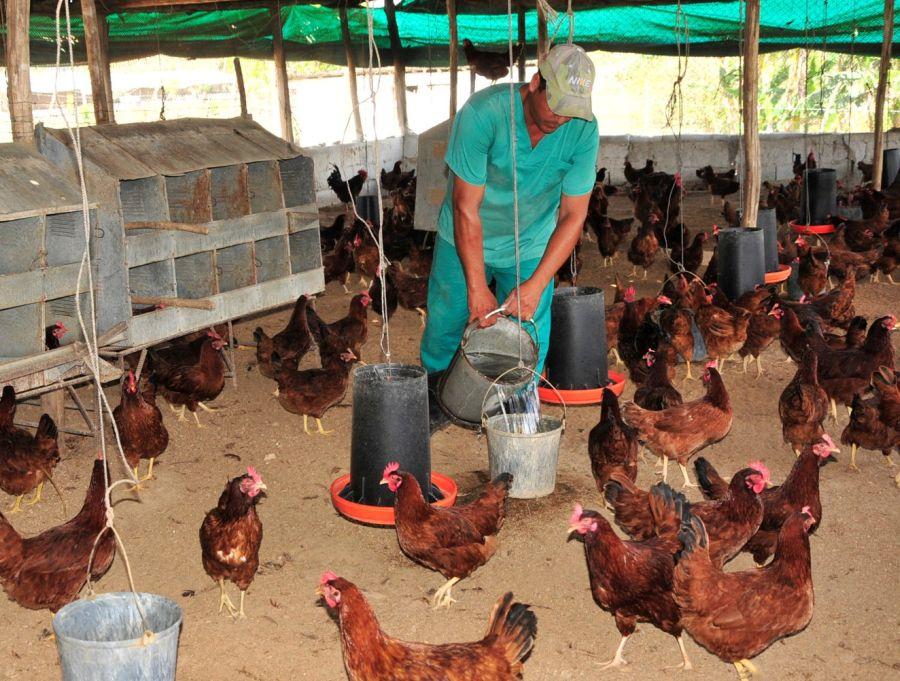 sancti spiritus, avicultura, fomento, plan turquino