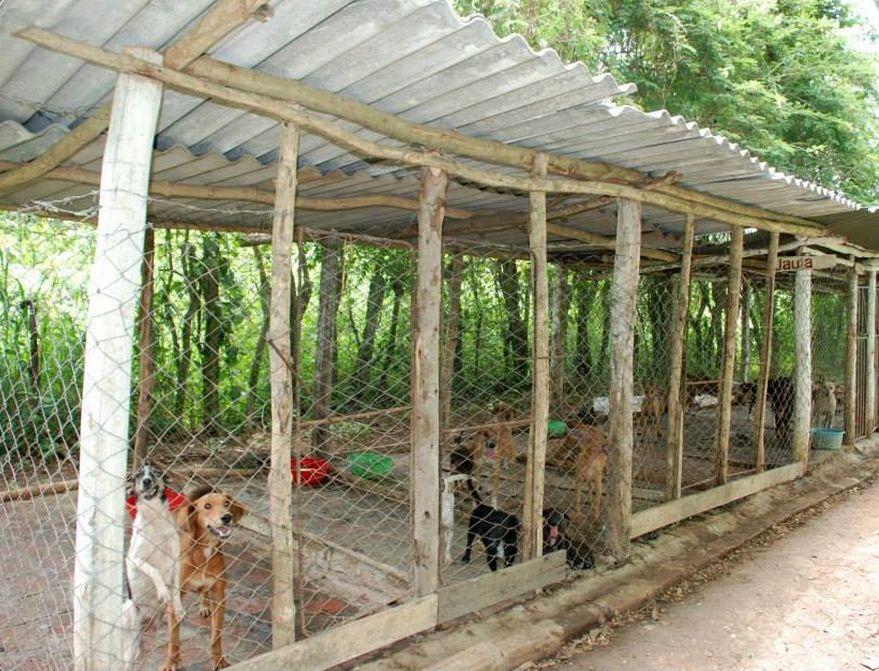 sancti spiritus, animales, perros, asilo para perros